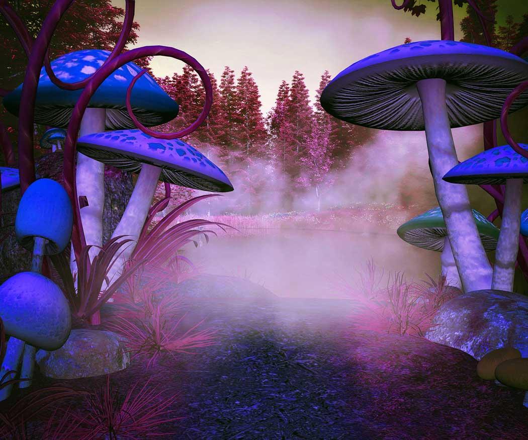 Growing Psilocybin Mushrooms Isn't Magic