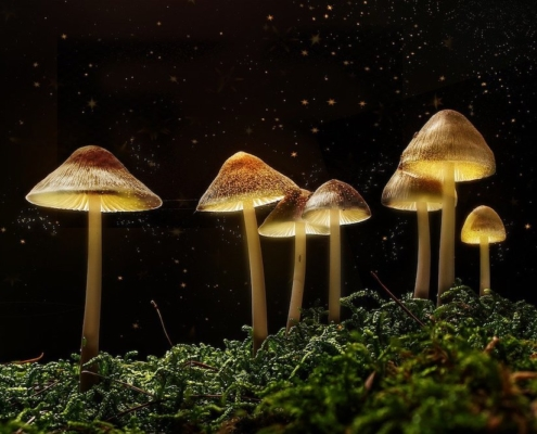 Psychedelics the Most Cost-Effective Way to Treat Mental Health Issues