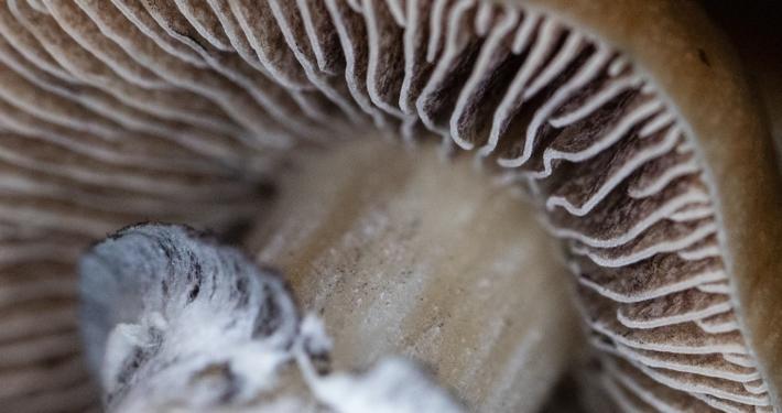 What Are Mushroom Spores