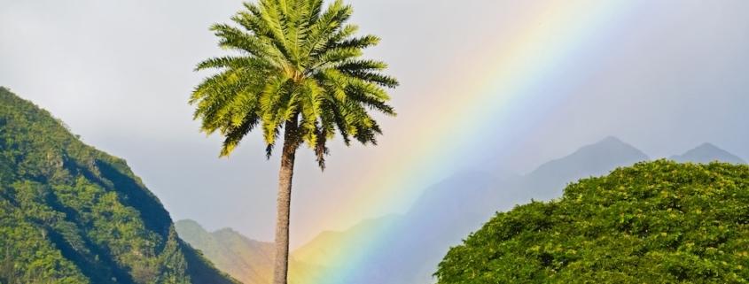 Hawaii Moves to Legalize Psilocybin Treatment