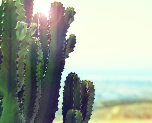 The Benefits of Mescaline: How An Ancient Cactus Became a Future Medicine