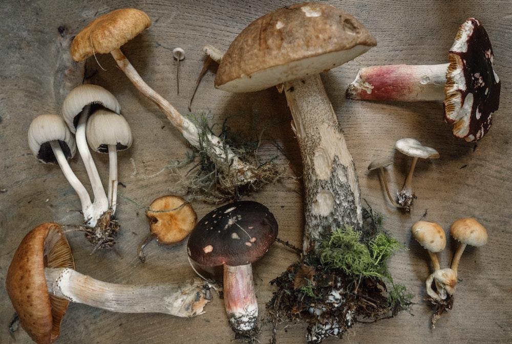 Vermont Bill Would Decriminalize Psychedelics In Interest of Public Health