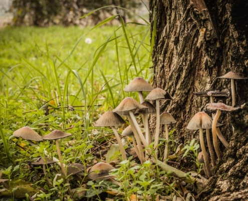 North America Is Poised to Take the Lead In Emerging Psychedelic Drug Market