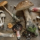 40 'New' Psychedelic Compounds Found In More Than 25 Species of Mushrooms