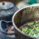 Ayahuasca May Help Curb Drug and Alcohol Addiction