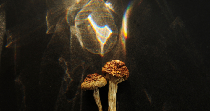 Why These Researchers Are Concerned About Psychedelic Legalization