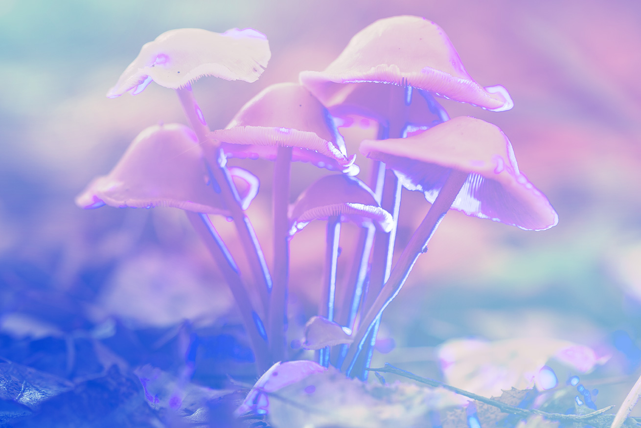 Survey Shows American Psychologists Still Don't Really Understand Psychedelics