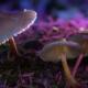 Michigan Senators Propose Bill Legalizing Plant-Based Psychedelics