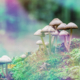Best Areas to Forage for Psychedelic Mushrooms in the United States